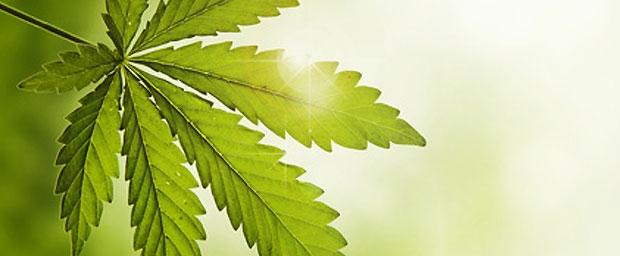 Mit Cannabis gegen Akne